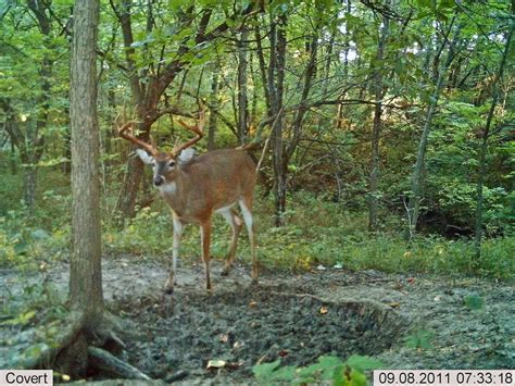 mineral licks for deer jpg 1024x768
